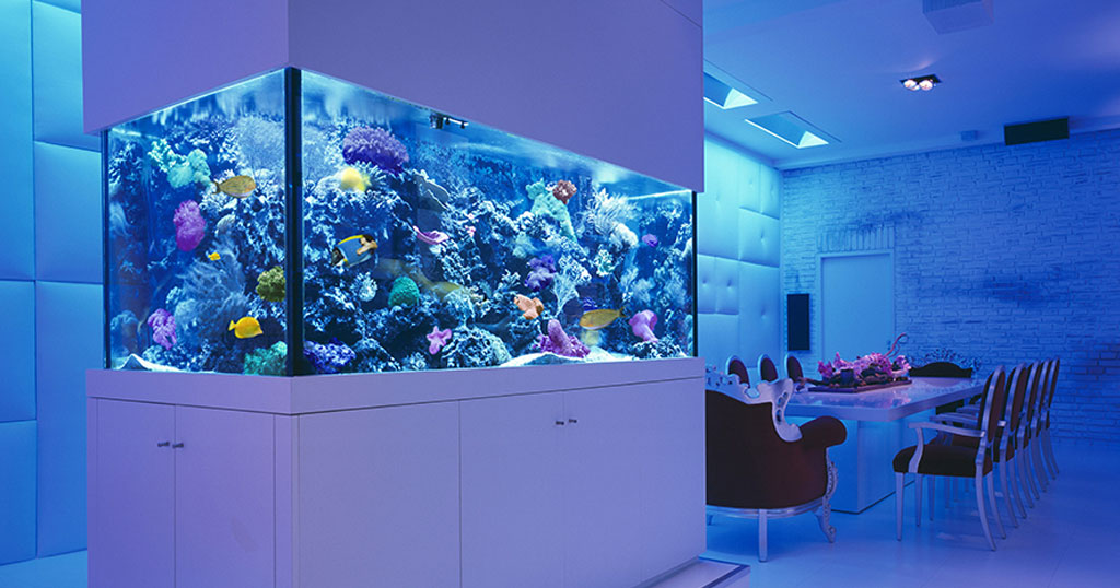 Aquatech - Designer Custom Fish Aquariums - Custom built fishtanks made in Manchester