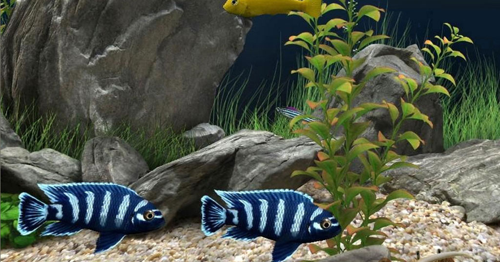 Aquatech - Designer Custom Fish Aquariums - Bespoke Fish Tanks and Aquariums