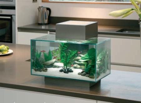 Desktop Aquariums Bespoke Designer Aquariums Amp Custom