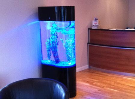 Oval Aquariums Bespoke Designer Aquariums Amp Custom Fish