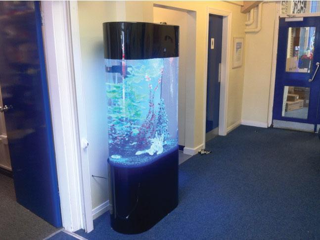 Oval aquariums bespoke designer aquariums custom fish for Tower fish tank