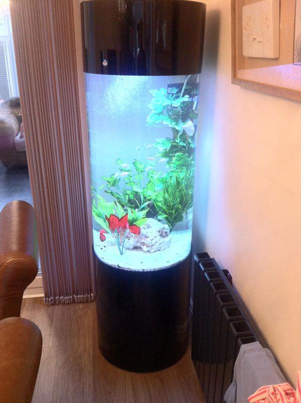 cylinder aquariums bespoke designer aquariums custom