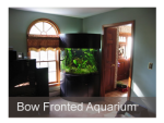Bow Fronted Aquarium